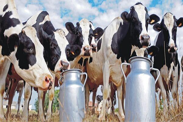 Highest Milk Producing States